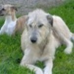 Expert Loisirs - Conseils pour les chiens